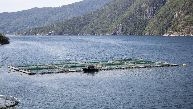 FISH FARMS <br>and Aquaculture